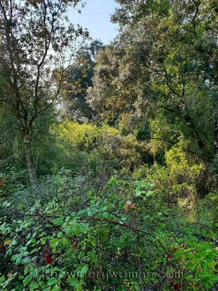 Walk-in-the-woods3_9.8.18_TWW