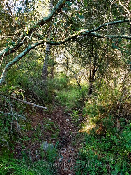 Walk-in-the-woods8_9.8.18_TWW