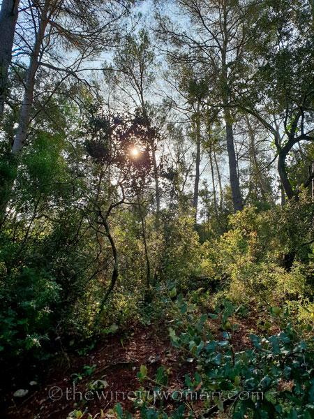 Walk-in-the-woods9_9.8.18_TWW