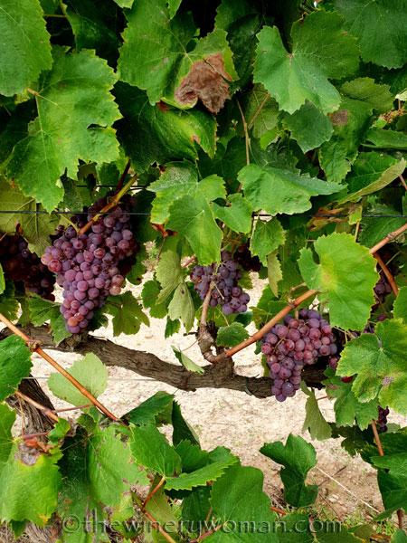 Winery_Tour2_9.12.18_TWW