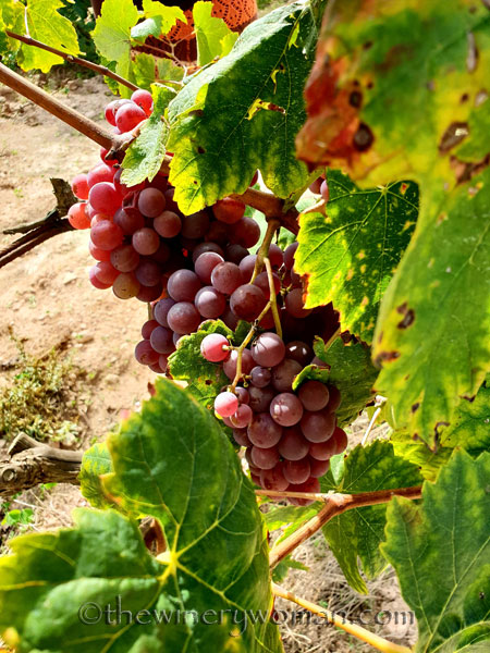 Winery_Tour6_9.12.18_TWW