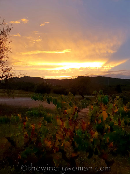 Autumn_Vineyard_Sunset11_10.9.18_TWW