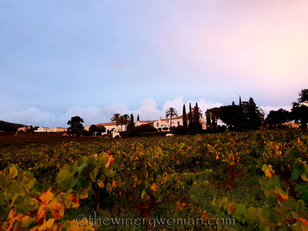 Autumn_Vineyard_Sunset12_10.9.18_TWW