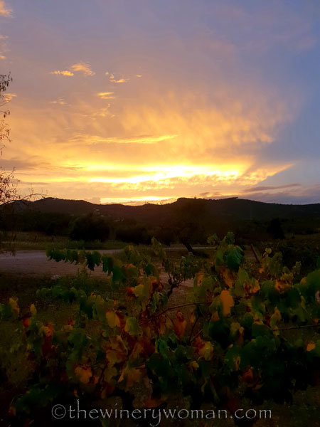 Autumn_Vineyard_Sunset13_10.9.18_TWW