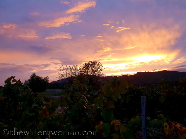 Autumn_Vineyard_Sunset14_10.9.18_TWW