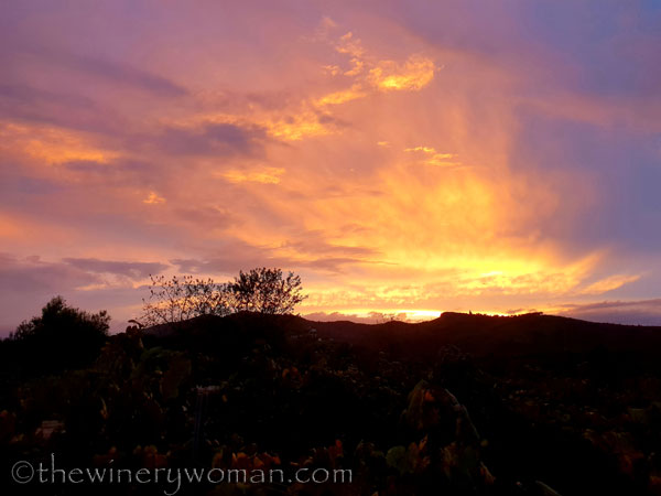 Autumn_Vineyard_Sunset15_10.9.18_TWW