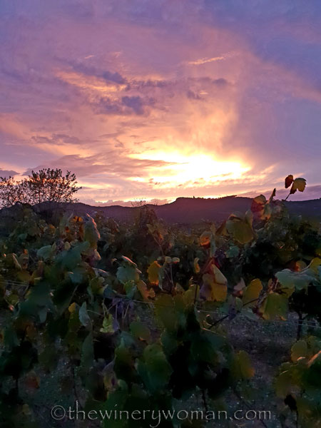 Autumn_Vineyard_Sunset16_10.9.18_TWW