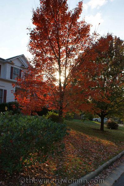 Autumn_Wakehurst_10.2012_TWW