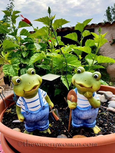 Froggie-Garden_10.20.18_TWW