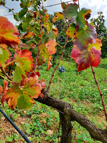 Sunday_Vineyard_Stroll25_10.14.18_TWW