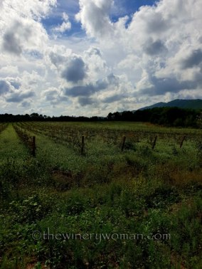 Sunday_Vineyard_Stroll2_10.14.18_TWW