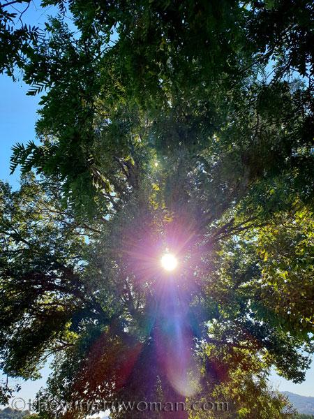Sunlight_10.24.18_TWW