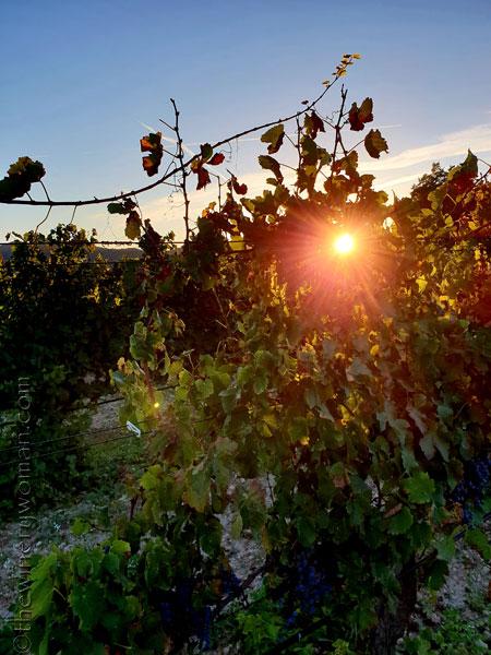 Sunlight_on_the_vineyard4_10.2.18_TWW