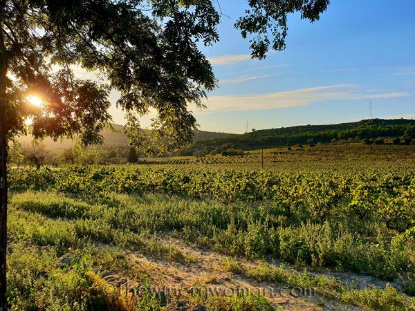Sunlight_on_the_vineyard_10.2.18_TWW