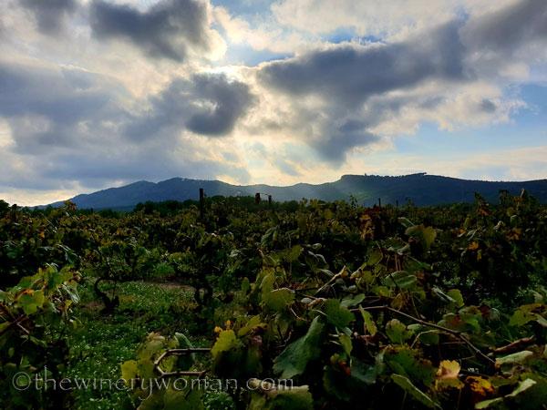 Vineyard4_10.12.18_TWW