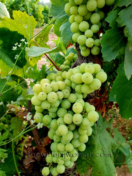 Vineyard8_7.15.18_TWW