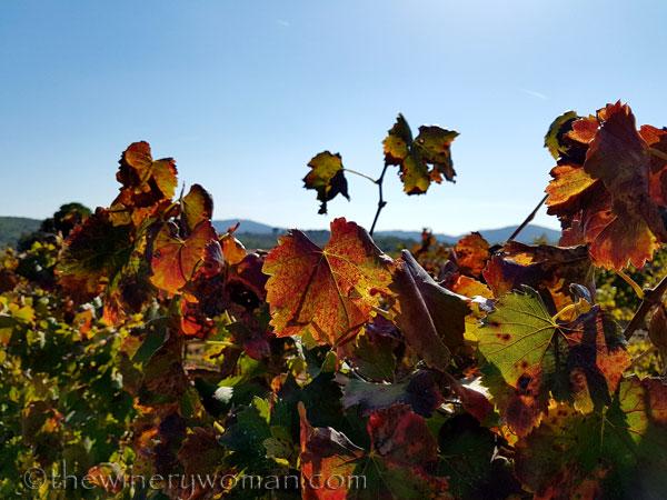 Vineyard_10.2017_TWW