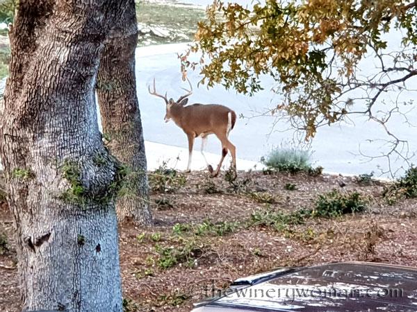 Oh_Deer3_11.17.18_TWW