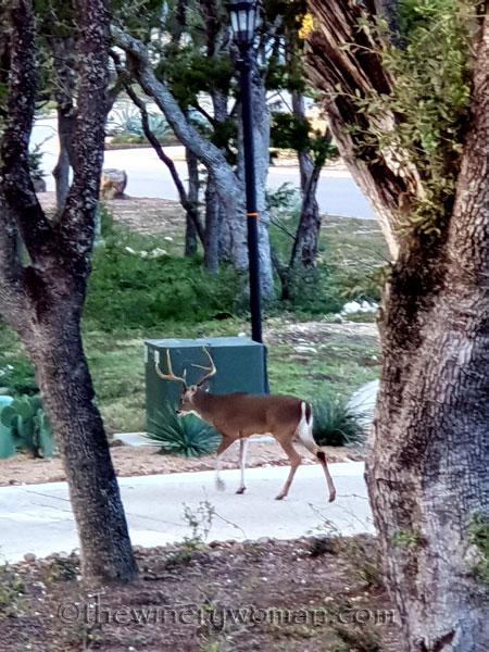 Oh_Deer4_11.17.18_TWW