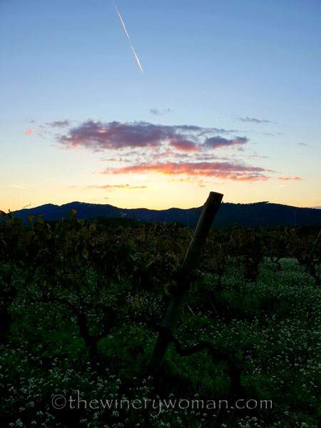 Sunset_Vineyard5_11.2.18_TWW