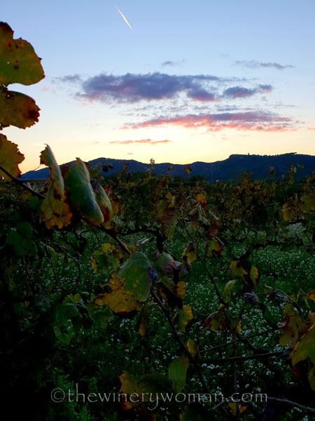 Sunset_Vineyard7_11.2.18_TWW