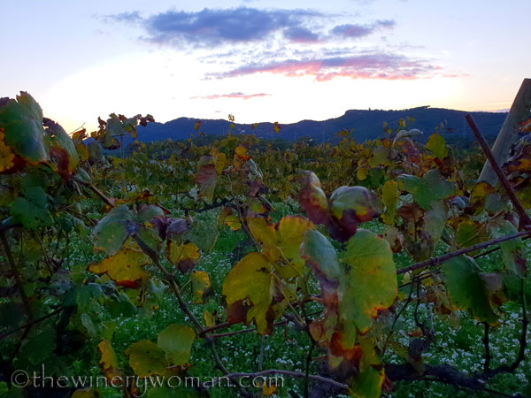 Sunset_Vineyard9_11.2.18_TWW