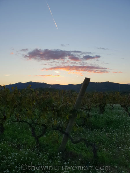 Sunset_Vineyard_11.2.18_TWW