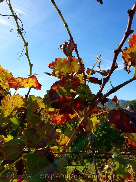 Autumn_Vineyard4_11.4.18_TWW