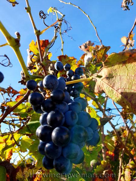 Autumn_Vineyard5_11.4.18_TWW