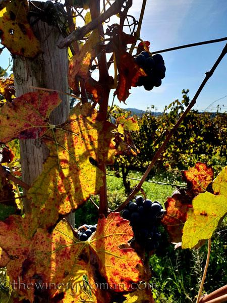 Autumn_Vineyard6_11.4.18_TWW