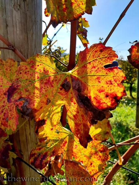 Autumn_Vineyard7_11.4.18_TWW