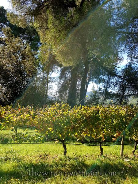 Autumn_Vineyard_11.4.18_TWW