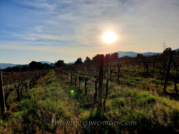 Vineyard2_12.23.18_TWW