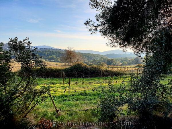 Vineyard6_12.23.18_TWW