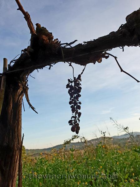 Vineyard7_12.23.18_TWW