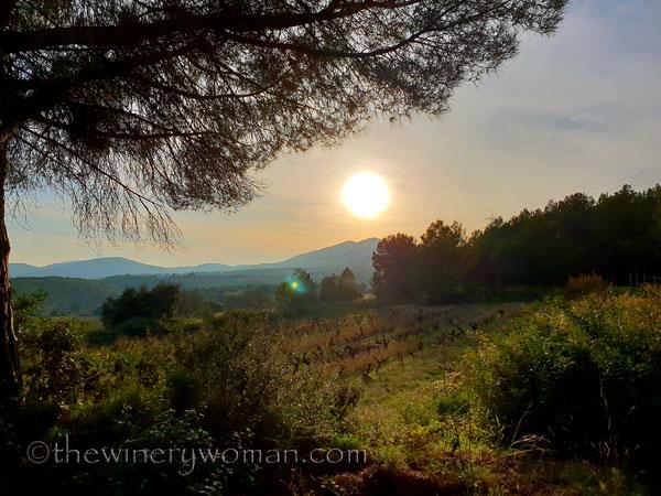 Vineyard8_12.23.18_TWW