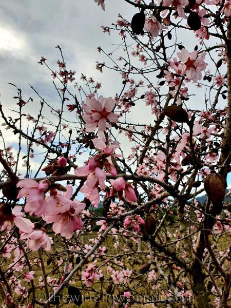 almond_blossoms7_1.31.19_tww