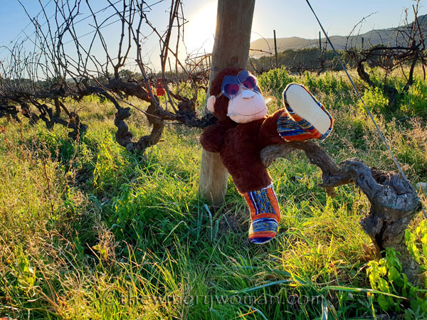grape_ape_vineyard10_1.9.19_tww