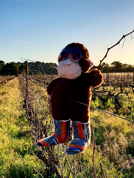 grape_ape_vineyard12_1.9.19_tww
