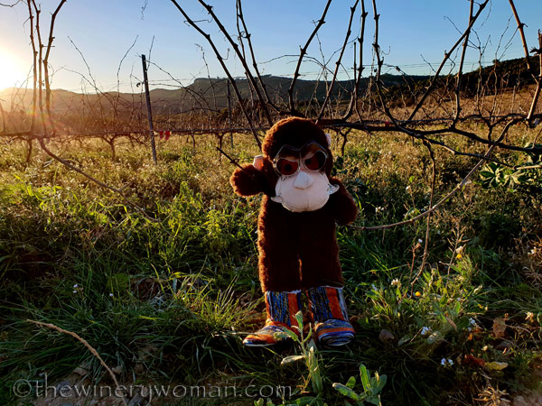 grape_ape_vineyard18_1.9.19_tww