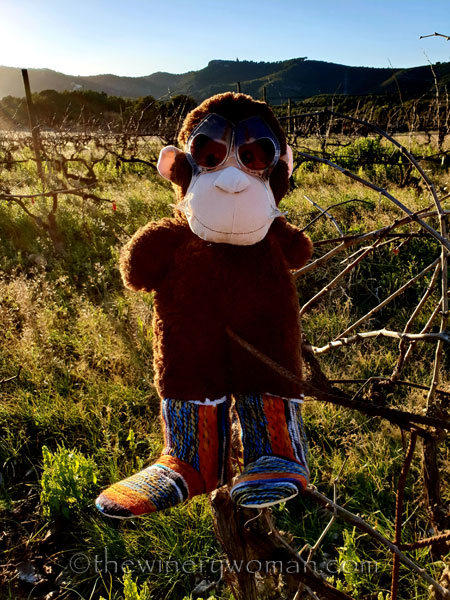 grape_ape_vineyard4_1.9.19_tww