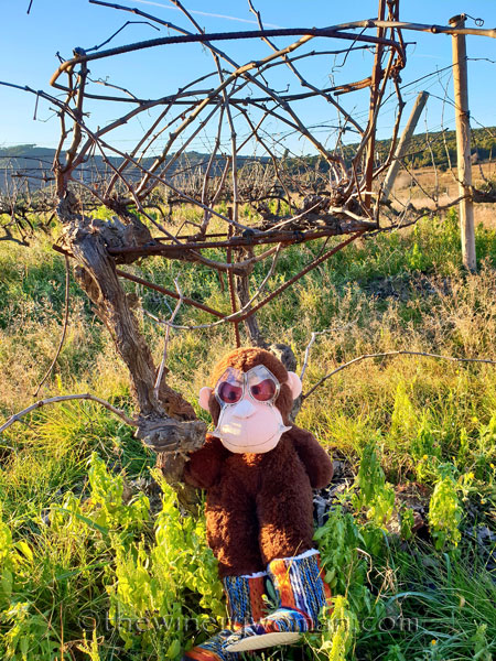 grape_ape_vineyard8_1.9.19_tww