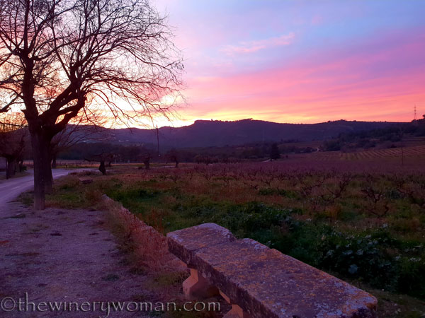 sunset_in_the_vineyard10_1.8.19_tww