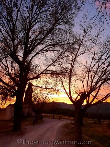sunset_in_the_vineyard11_1.8.19_tww