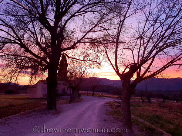 sunset_in_the_vineyard12_1.8.19_tww