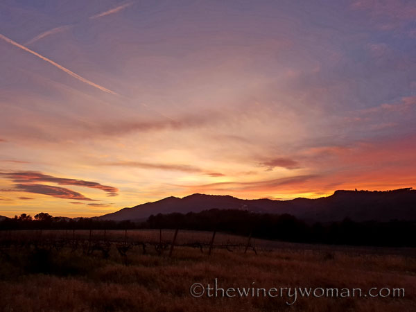 sunset_in_the_vineyard13_1.8.19_tww