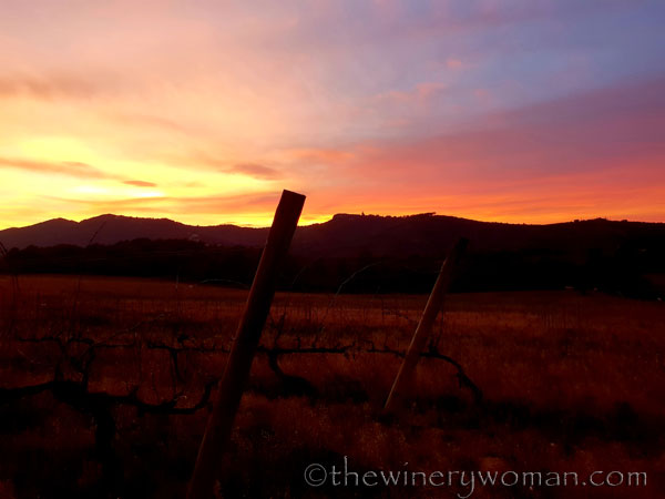 sunset_in_the_vineyard14_1.8.19_tww
