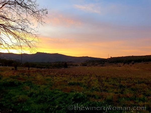 sunset_in_the_vineyard2_1.8.19_tww