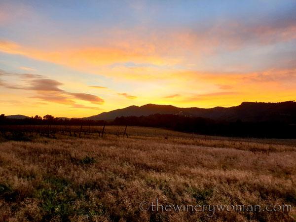 sunset_in_the_vineyard3_1.8.19_tww