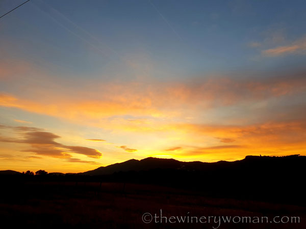 sunset_in_the_vineyard4_1.8.19_tww